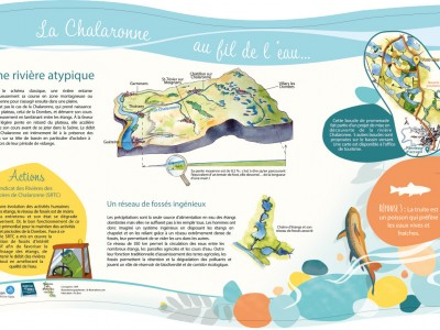La Chalaronne, rivière atypique