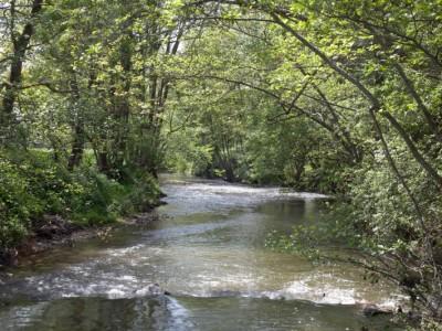 La Chalaronne à Châtillon